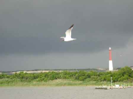 Bird Lighthouse 6-09